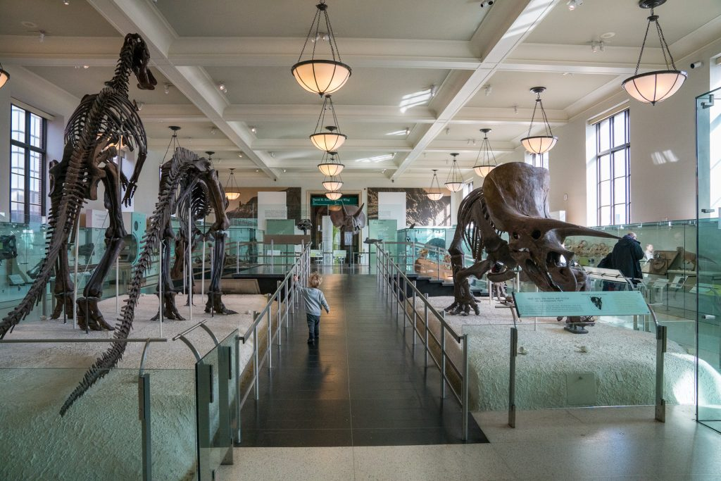 Things to do in NYC with Kids: Dinosaur hall at American Museum of Natural History