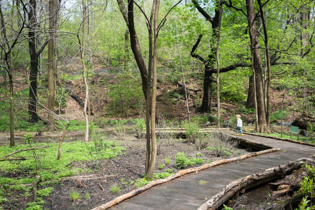 Things to do in NYC with Kids: Walking paths through the woods in Central Park