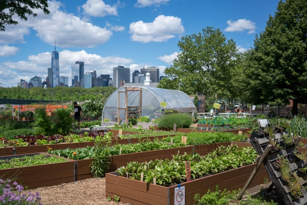Things to do in NYC with Kids: Growing vegetables on Governors Island