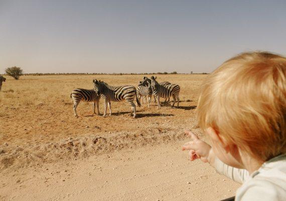 Etosha National Park: A Safari and Camping Adventure