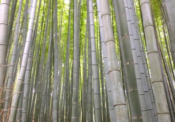 Arashiyama: A Bamboo Forest and Monkeys