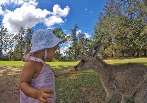 Sun, Sand, and Koalas in Brisbane