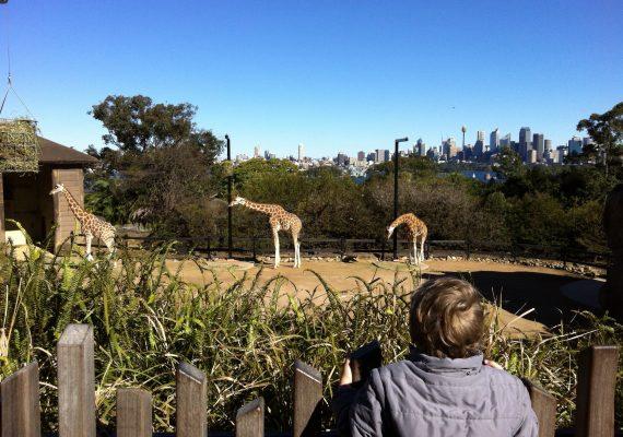 Sydney's Taronga Zoo Adventure