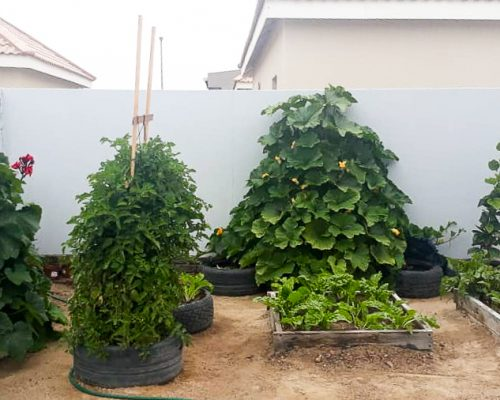 Africa for Kids: Vegetable garden in Swakopmund