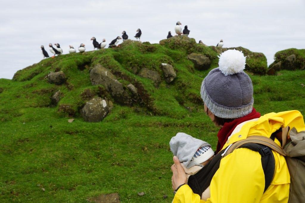 Faroe Islands with kids: puffins