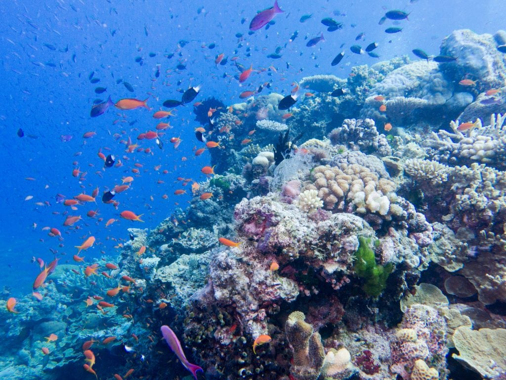 Australia for Kids: Coral Reef Fish