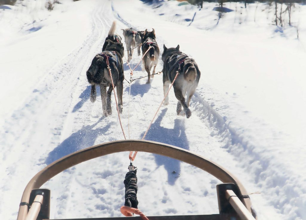 What to do in Finland with kids: Husky Ride