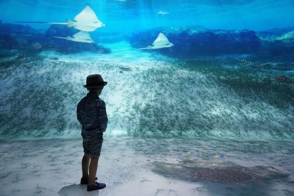 Things to do in NYC with Kids: National Geographic Encounter